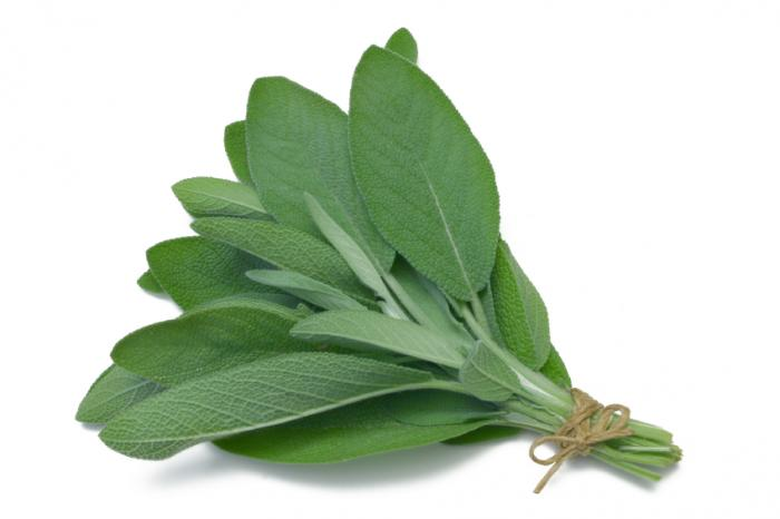 bunch-of-sage-leaves